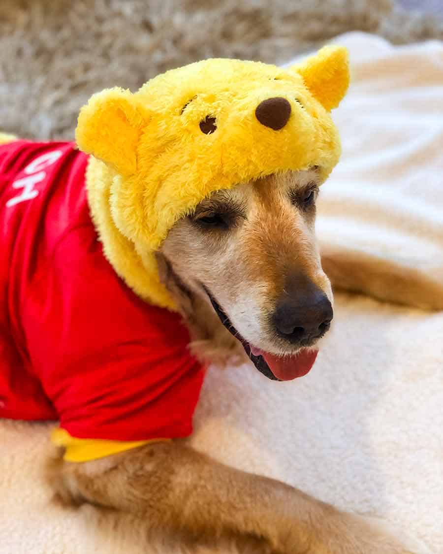 Bulldozer Winnie the Pooh Outfit